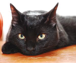 Cat_Photo 3