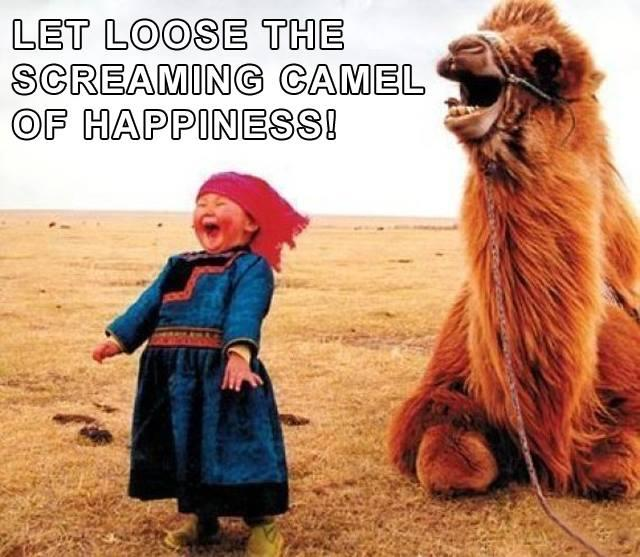 screaming_camel_Happiness
